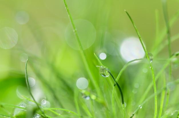 Le concept de l'amour de l'environnement vert du monde