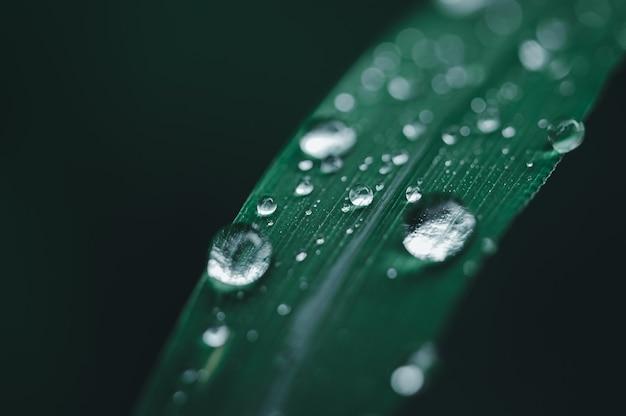 Concept d'amour environnemental gouttelettes d'eau sur les feuilles