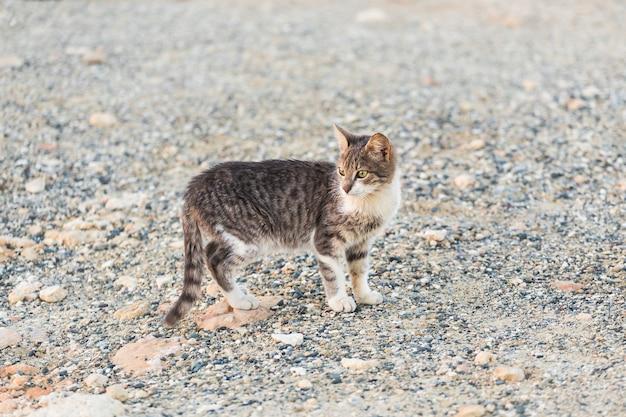 Concept d'animaux sans abri - chat errant dans la rue.