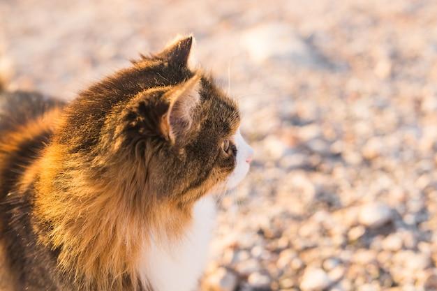 Concept d'animaux sans abri - chat mignon errant dans la rue