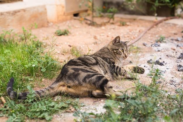 Concept d'animaux sans-abri - chat mignon à l'extérieur