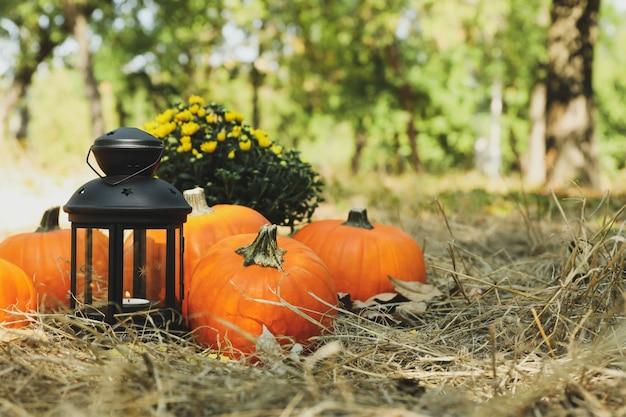 Concept d'automne confortable avec des citrouilles et des bougies en plein air