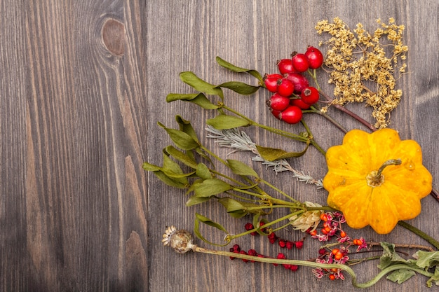 Concept d'automne halloween. citrouille, gui, sureau, pavot, houblon, rose de chien, schisandra