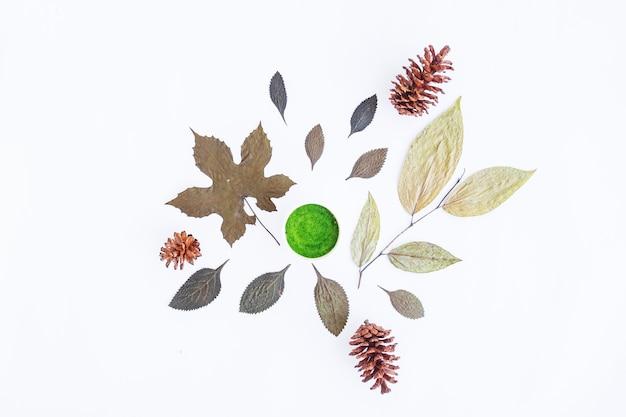 Concept d'automne minimaliste. feuilles séchées, fleurs de pin isolés sur fond de papier blanc