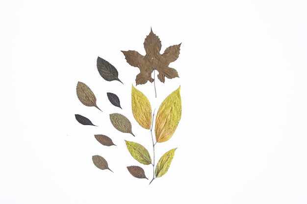 Concept d'automne minimaliste. feuilles séchées isolés sur fond de papier blanc