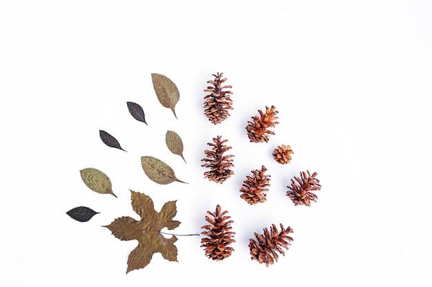 Concept d'automne minimaliste. fleurs de pin, feuilles séchées isolées sur fond de papier blanc. concept de noël minimaliste