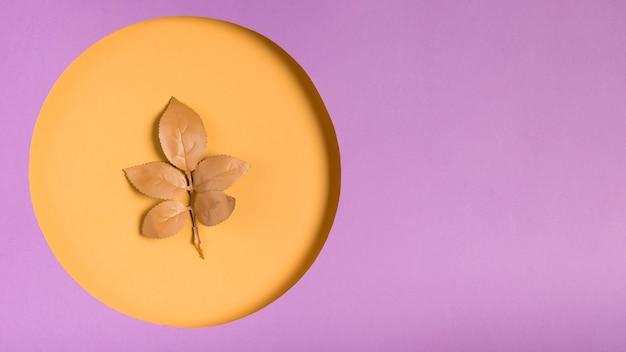Concept de cercle de papier avec une feuille sur le dessus