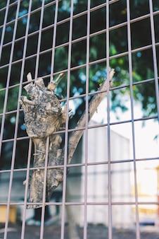 Concept coincé. un morceau de branche d'arbre est collé sur le treillis métallique.
