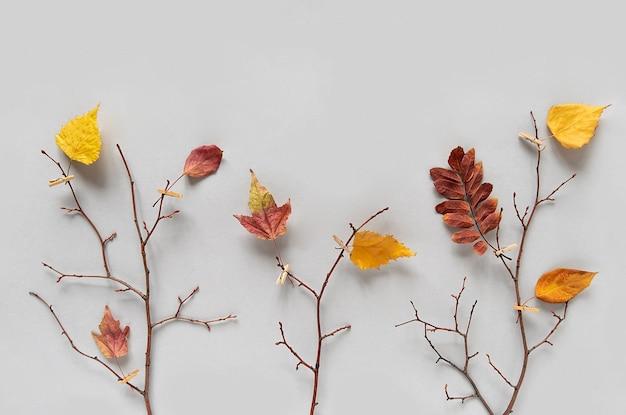 Concept créatif d'automne. branches d'arbres avec des feuilles d'automne colorées sur des pinces à linge sur fond gris. vue de dessus, mise à plat