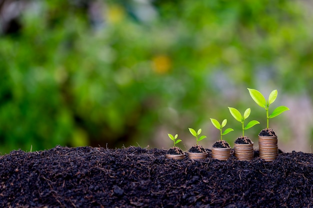 Concept de croissance des économies, germination des plantes à partir du sol