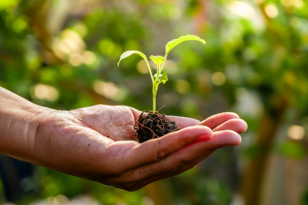 Concept de croissance, les mains plantent les semis dans le sol