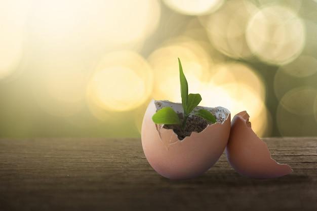 Concept de croissance des œufs