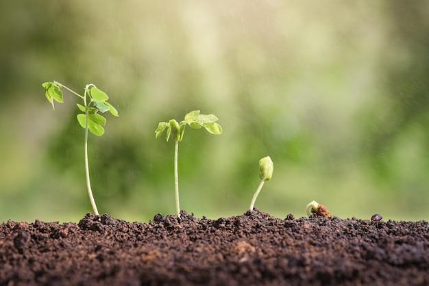 Concept de culture de semences
