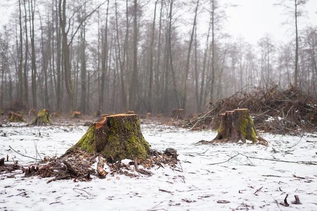 Concept de déforestation