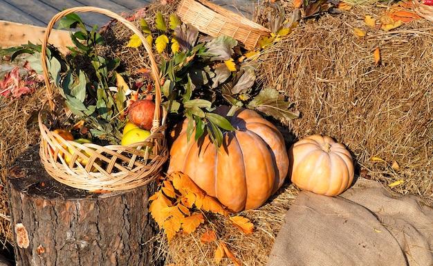 Concept du festival de la récolte de thanksgiving. citrouilles orange automne sur paille avec des feuilles.