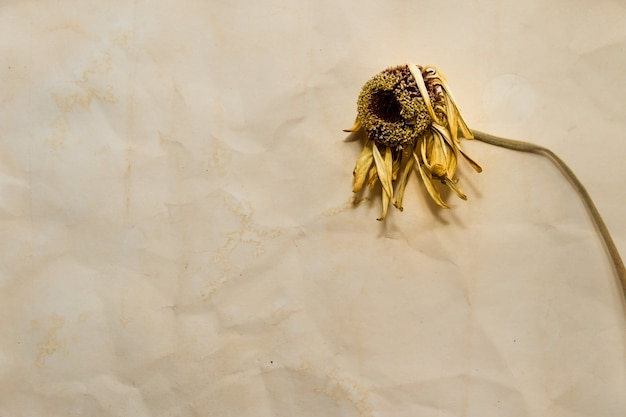 Concept du temps qui passe avec des fleurs fanées sur de vieux papiers