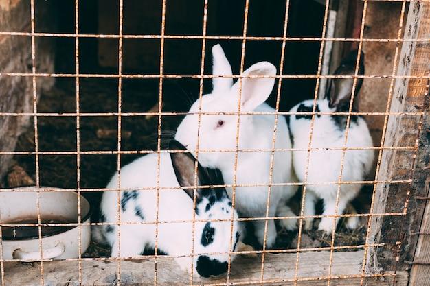 Concept de ferme avec des lapins