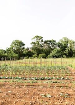 Concept de ferme avec plantation de légumes