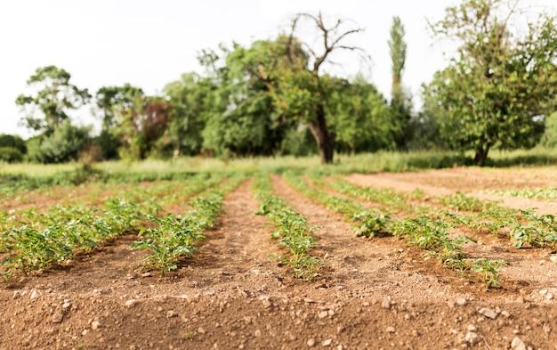 Concept de ferme avec plantation