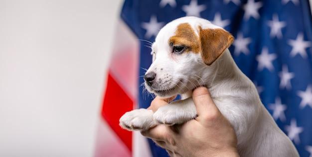 Concept de la fête de l'indépendance américaine, petit chiot pose devant le drapeau américain