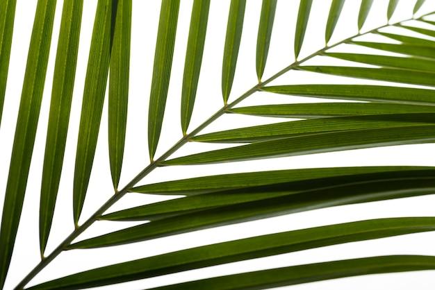 Concept de feuille de feuillage vert gros plan