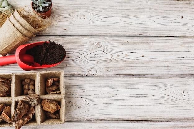 Concept de fleuriste. replanter de belles plantes grasses sur du bois
