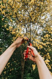 Concept de jardinage - jardinier dans un jardin ensoleillé plantant des roses rouges. femme âgée de 80 ans travaillant dans le jardin