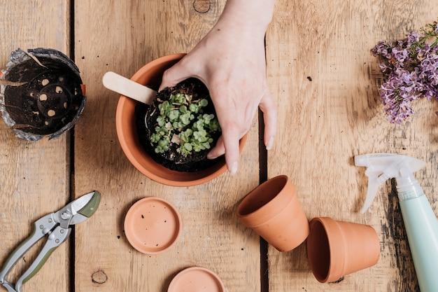 Concept de jardinage laïque créatif