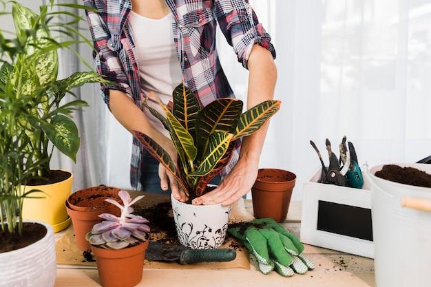 Concept de jardinage avec des mains féminines