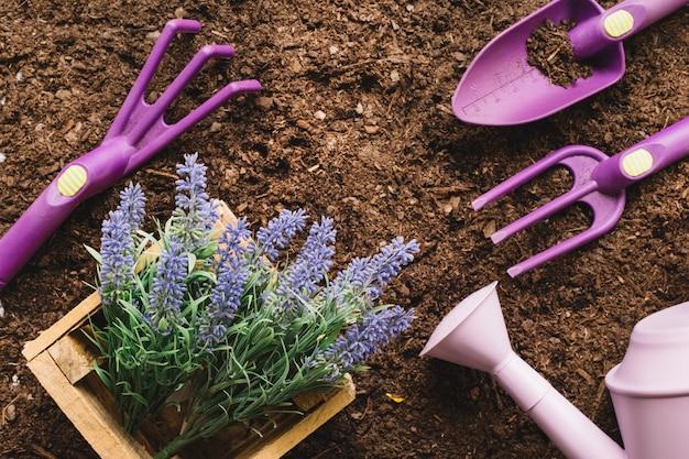 Concept de jardinage avec plante et outils