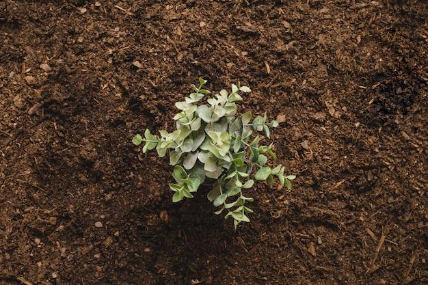 Concept de jardinage avec plante unique