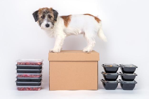 Concept de livraison de nourriture pour chien et nourriture saine naturelle. espace pour le texte et la maquette.