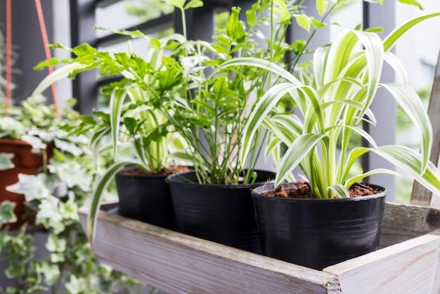 Concept de maison et jardin d'araignée et de fougère en pot sur le balcon