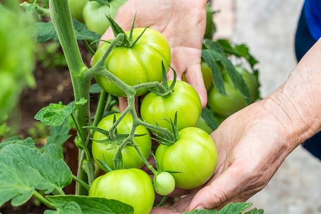 Concept maison, jardinage et agriculture.