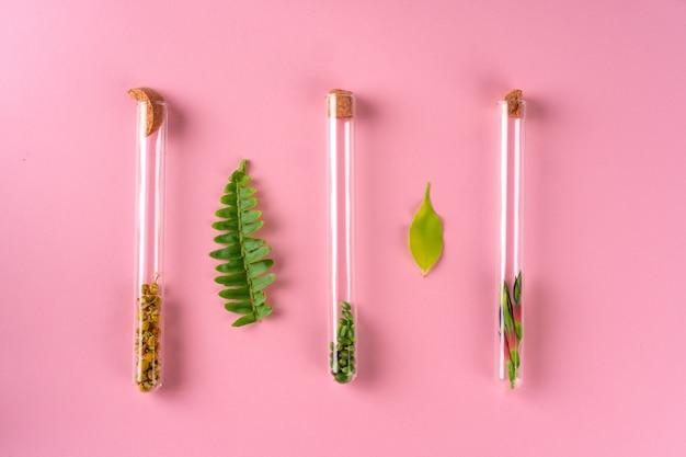 Concept de médecine alternative. médecine homéopathique à base de plantes naturelles