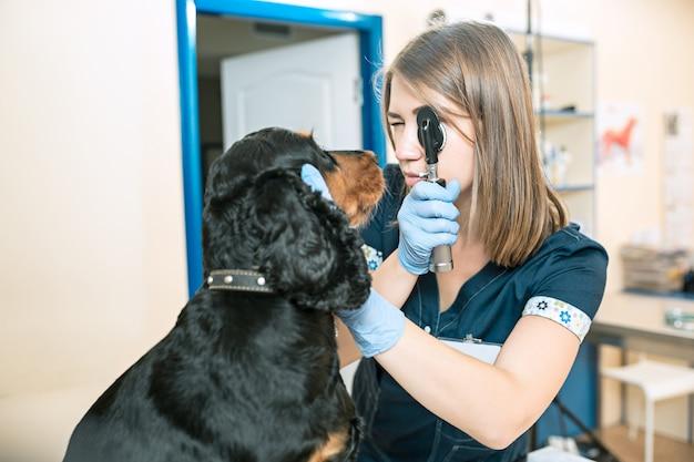 Le concept de médecine, de soins aux animaux et de personnes - chien et médecin vétérinaire à la clinique vétérinaire
