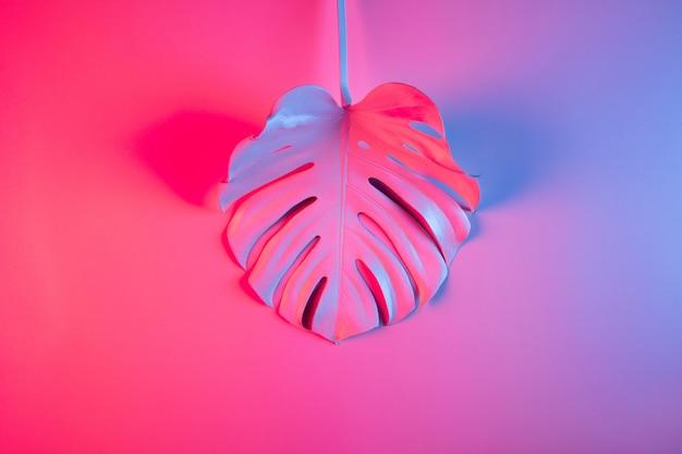 Concept minimal d'été tropical coloré avec une seule feuille de monstera sur fond dégradé rose et violet.