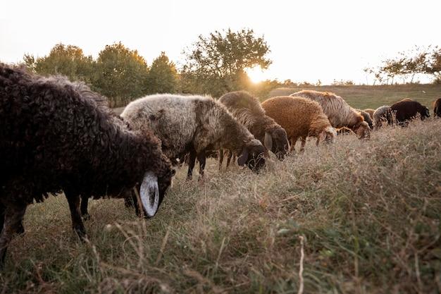 Concept de mode de vie rural avec des animaux