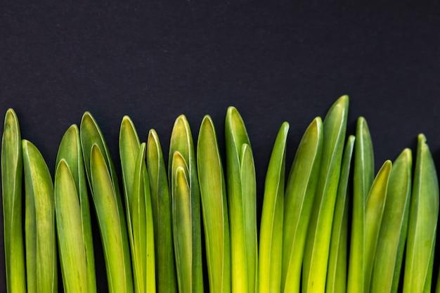 Concept de nature minimale de composition d'herbe. mise à plat avec des herbes vertes, fond vue de dessus