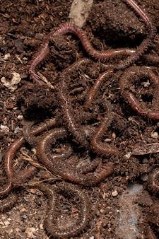Concept de nature morte de compost avec des vers de terre