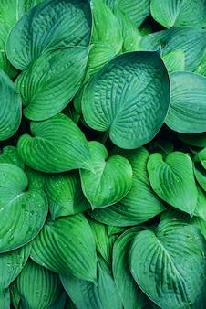 Concept de la nature. vue de dessus. gros plan des feuilles vertes. feuille tropicale.