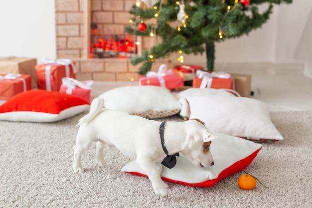 Concept de noël et animal de compagnie - petit jack russell terrier.