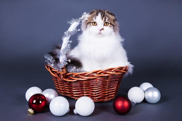 Concept de noël chat britannique assis dans un panier avec des décorations de noël sur fond gris