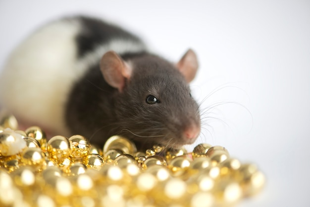 Concept de nouvel an. mignon rat domestique blanc dans un décor de nouvel an. le symbole de l'année 2020 est un rat