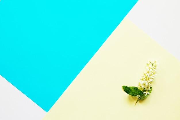 Concept de pâques minimal fleurs de printemps cerisiers d'oiseaux vue de dessus à plat espace de copie