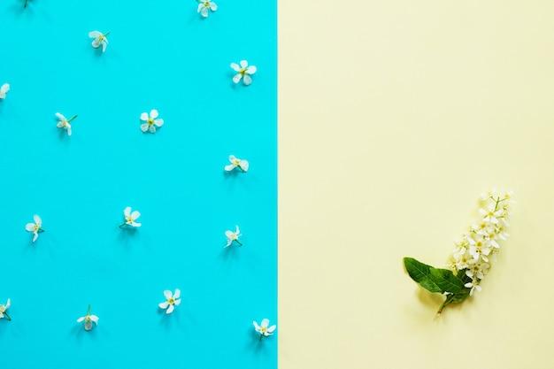 Concept de pâques minimal fleurs de printemps cerisiers d'oiseaux vue de dessus à plat