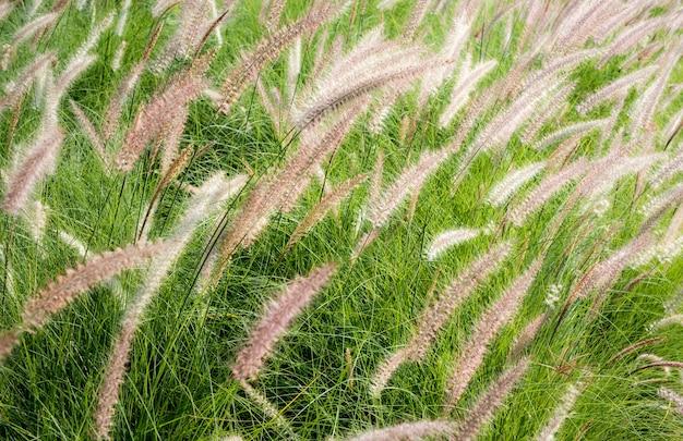 Concept de parc naturel écologie des prairies