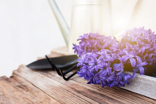 Concept de passe-temps de jardinage. fleur de jacinthe, petite fourche de jardin ou râteau et pelle, arrosoir en métal sur fond de bois