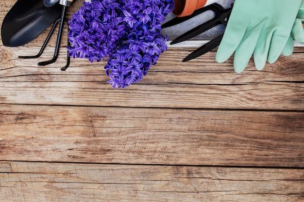Concept de passe-temps de jardinage. fleur de jacinthe, petite fourche de jardin ou râteau et pelle, gants, pot en céramique sur fond de bois