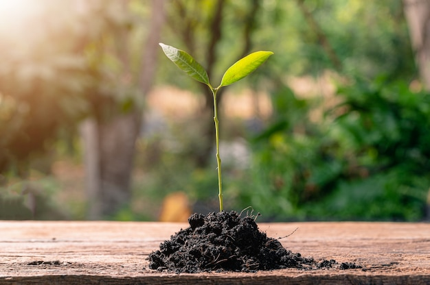 Concept de plantation d'un arbre d'amour